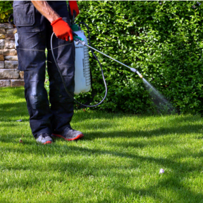 professional weed spraying in yard